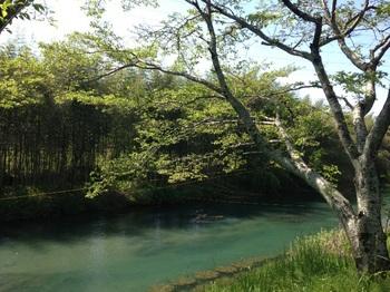 津保川のほとり 2015-04-23.jpeg